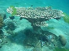 Bali 2006_12