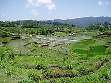 Bali 2006_3
