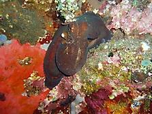 Bali 2006_8
