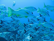 Malediven 2007_10