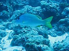 Malediven 2007_11