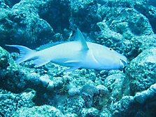 Malediven 2007_12