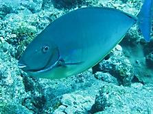 Malediven 2007_13