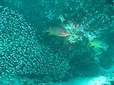 Malediven 2007_20