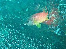 Malediven 2007_21