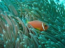 Malediven 2007_27