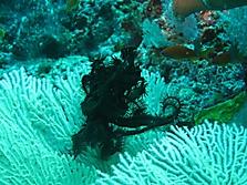 Malediven 2007_2