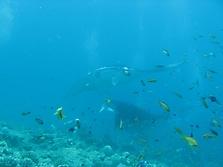Malediven 2007_40
