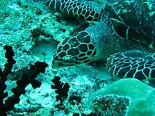 Malediven 2007_43