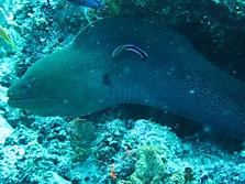Malediven 2007_44