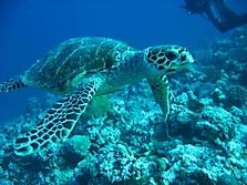 Malediven 2007_46