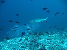 Malediven 2007_48