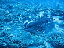 Malediven 2007_5