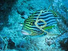 Malediven 2007_6