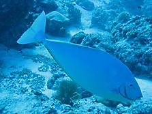 Malediven 2007_7