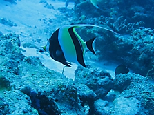 Malediven 2007_8