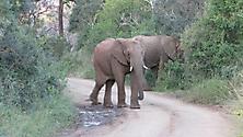 Südafrika 2009_20