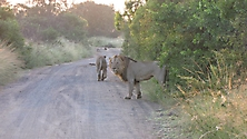Südafrika 2009_23