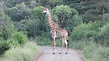 Südafrika 2009_24