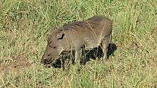 Südafrika 2009_25