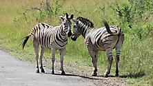 Südafrika 2009_28