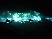 Mexico-yucatan-PlayaDelCarmen-2012_15