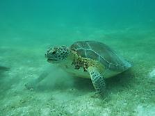 Mexico-yucatan-PlayaDelCarmen-2012_25