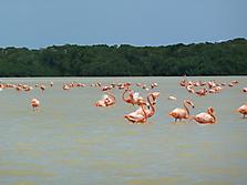 Mexico-yucatan-PlayaDelCarmen-2012_3