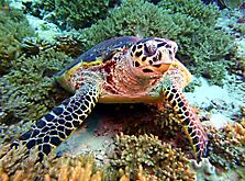 Malediven-Nordtour-HopeCruiser-2014_25