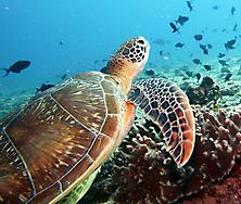 Malediven-Nordtour-HopeCruiser-2014_45