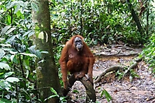 Sumatra 2015_5