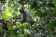 Sumatra 2015_6