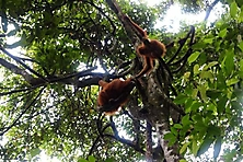 Sumatra 2015_8