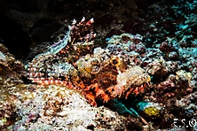 Sulawesi-Selayar_19