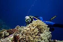 Sulawesi-Selayar_20
