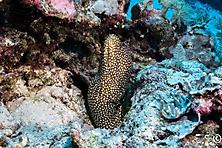 Sulawesi-Selayar_3