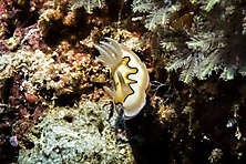 Sulawesi-Selayar_40
