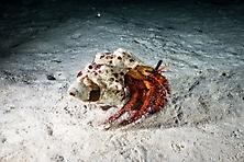 Sulawesi-Selayar_44