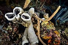 Sulawesi-Selayar_45