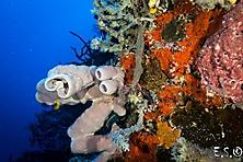 Sulawesi-Selayar_46