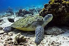 Sulawesi-Selayar_55