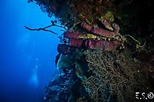 Sulawesi-Selayar_9